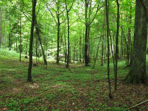 Miks peaksime kõik kohe metsa minema?