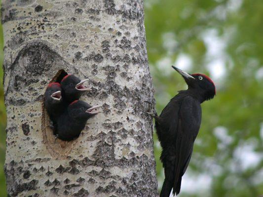 Kuidas linde ligi meelitada?
