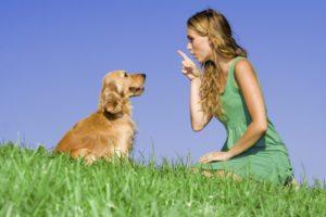 Kuidas treenida koera?