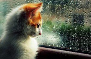 Mida teha vihmase ilmaga?