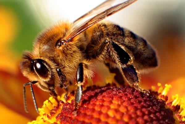 Mida teha kui mesilane nõelab?