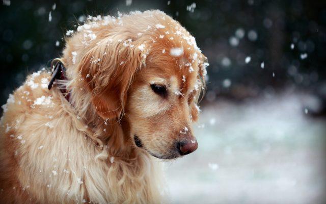 Kuidas aru saada kas su koer on depressioonis?