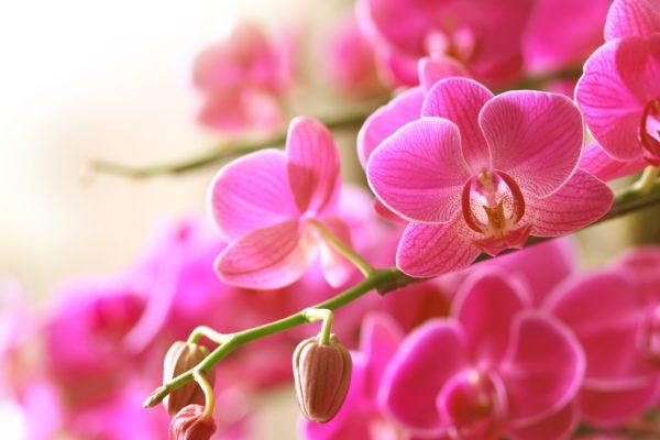 Kuidas orhidee eest hoolitseda?