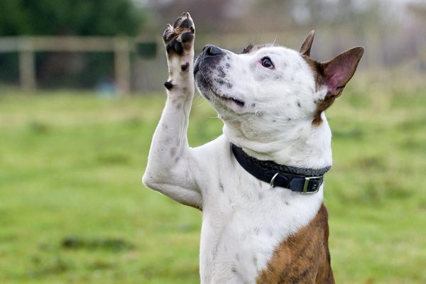 Kuidas kaitsta koera käppasid?