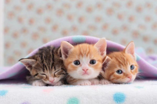 Kuidas kassipoega sotsialiseerida?