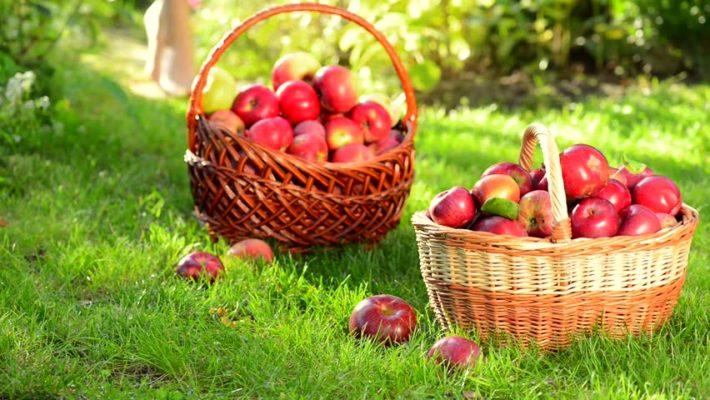 Kuidas säilitada õunu?