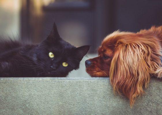 Kuidas koera ja kassi omavahel tutvustada?
