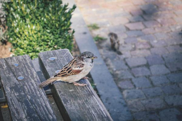 Kuidas vältida lindude lendamist vastu akent?