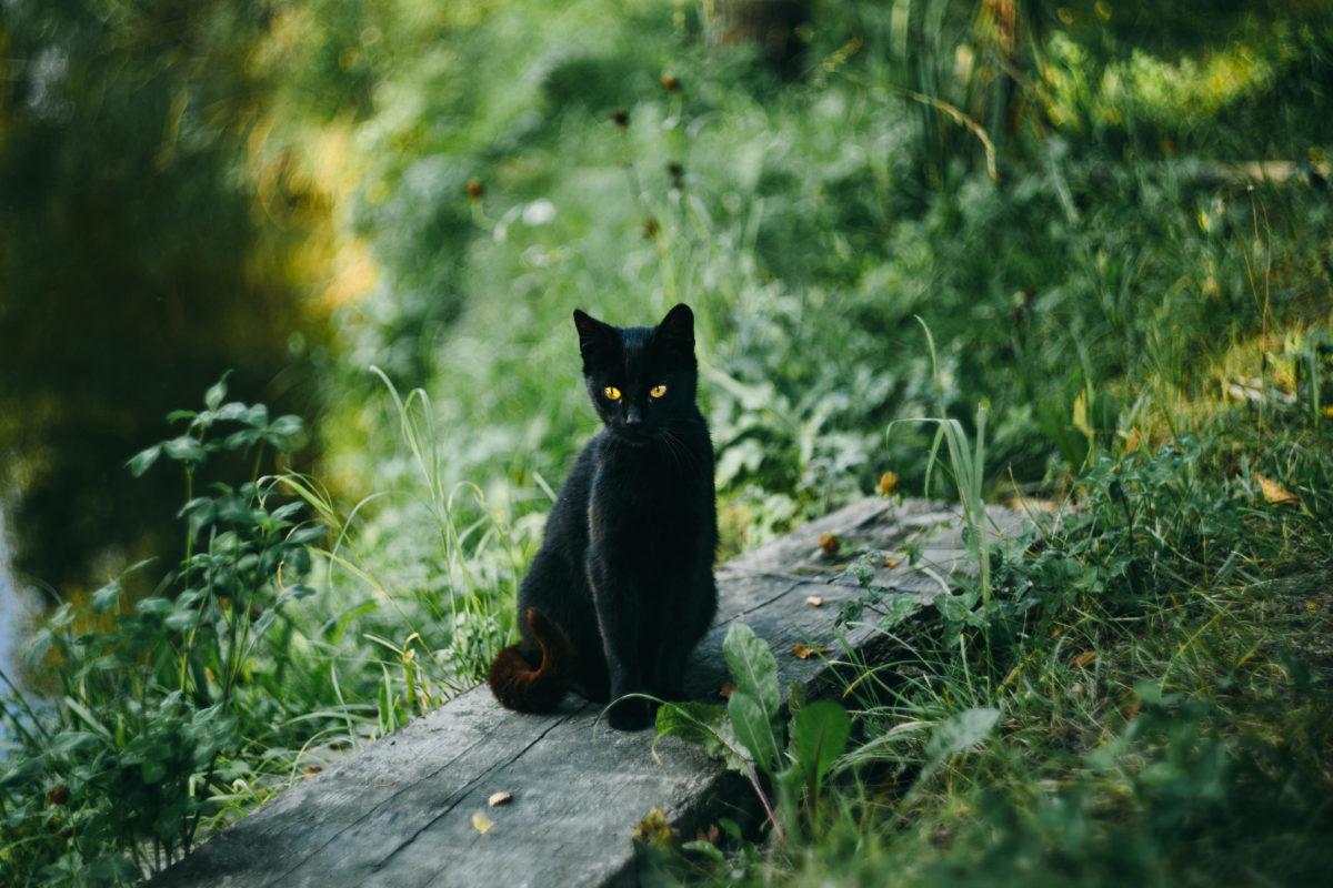 black cat at the pond