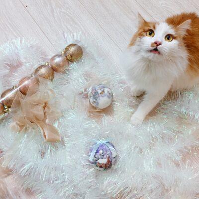 Kuidas jõulukuuske kassikindlaks teha?