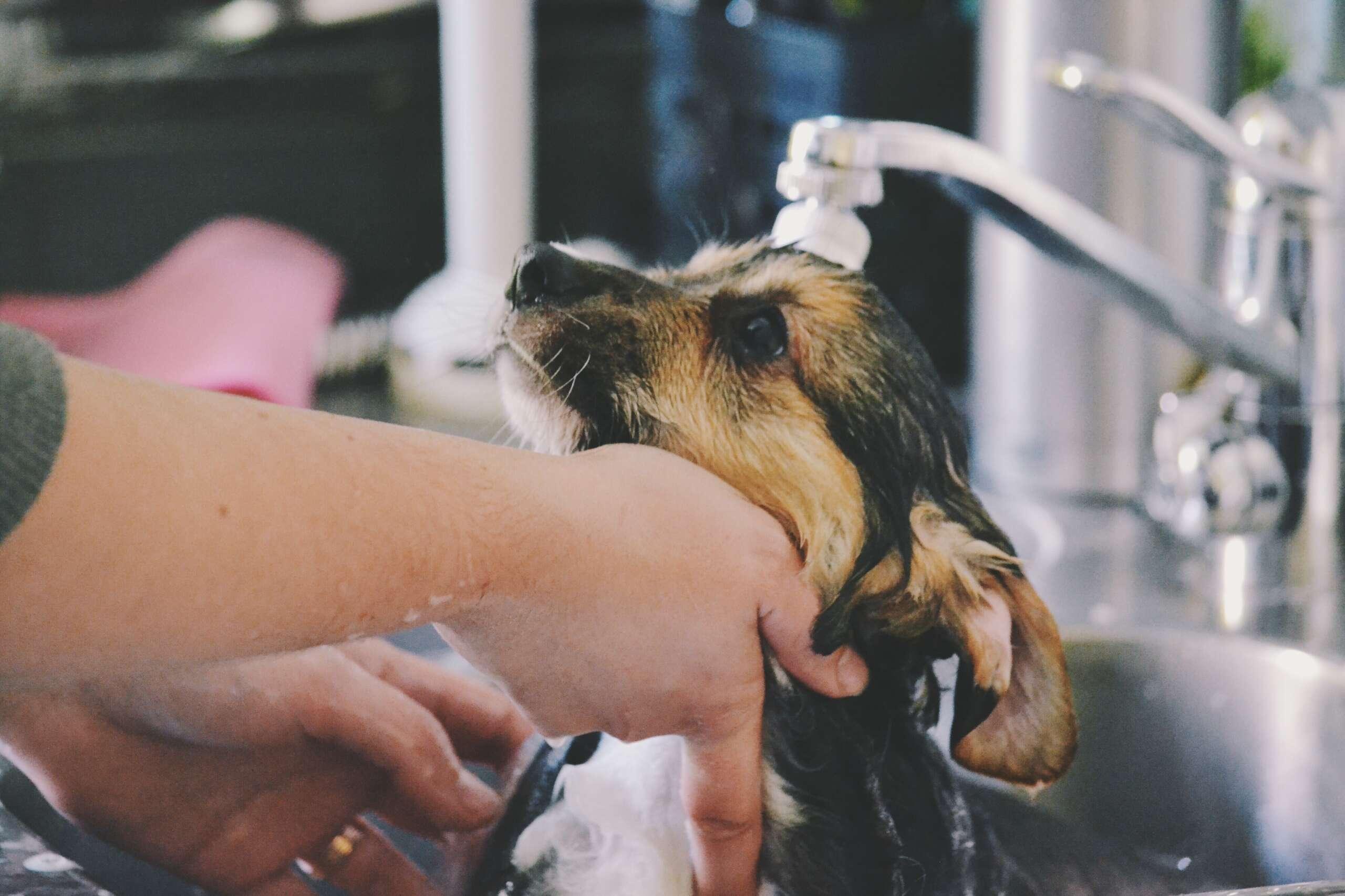 Kuidas pesta koera scaled