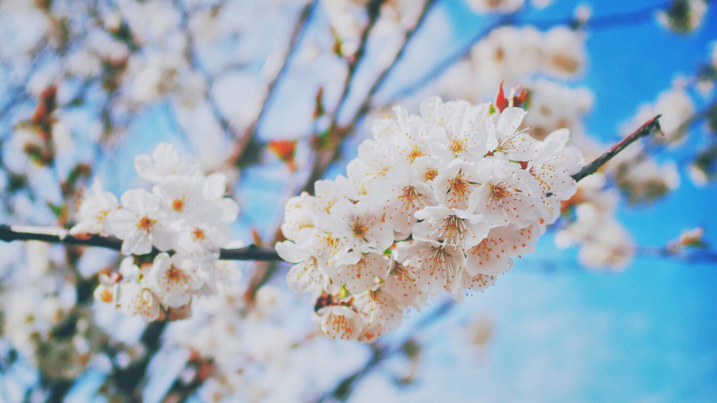 Kuidas leevendada kevadisi allergiaid