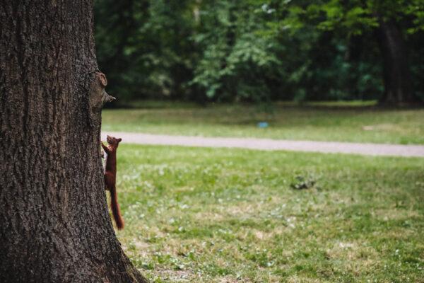 Kuidas oravaid eemal hoida
