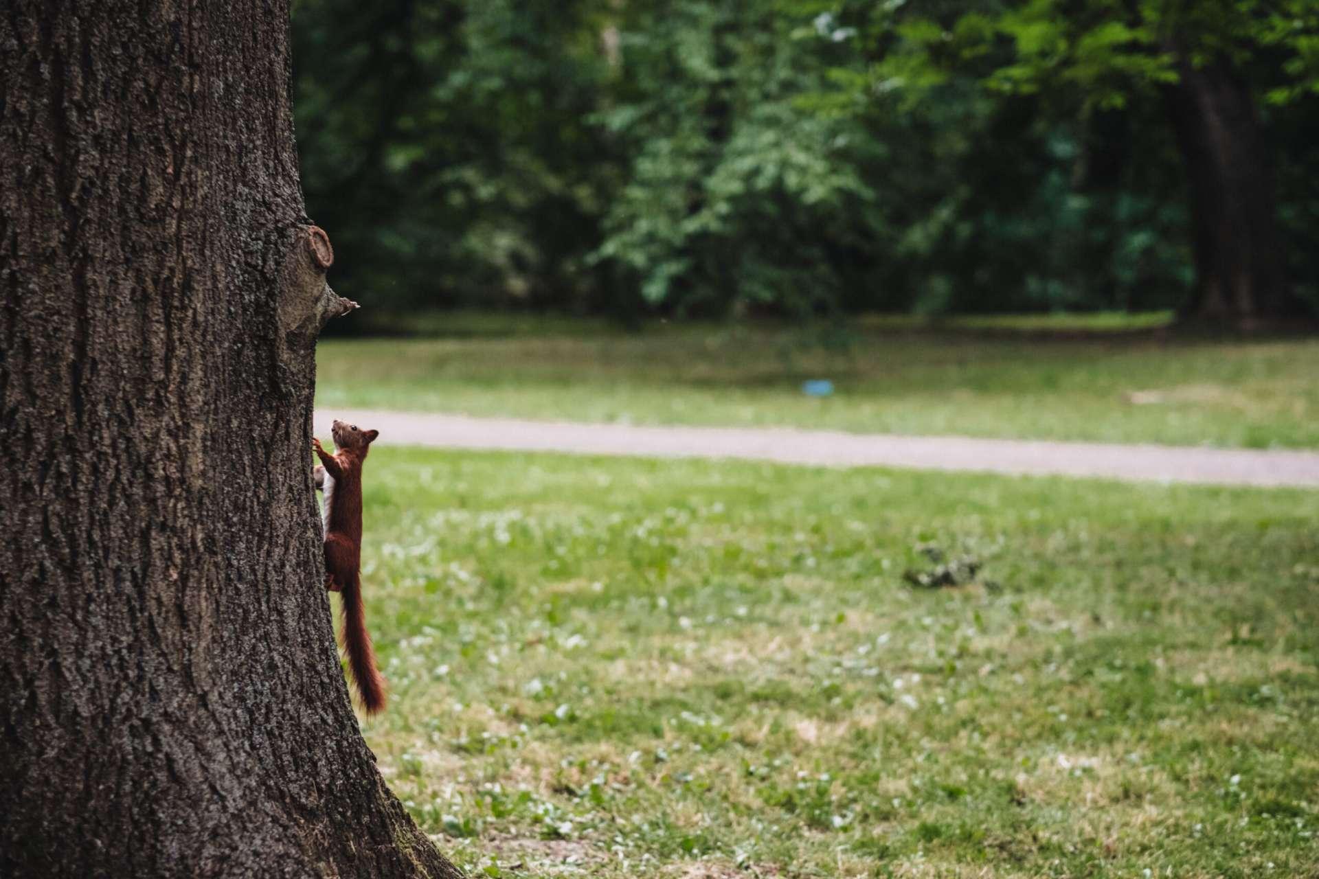 Kuidas oravaid eemal hoida scaled